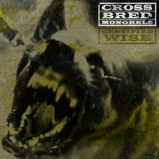crossbred Mongrels allaussie hip hop